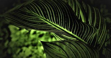 Muzyczne playlisty dla roślin w rozkwicie